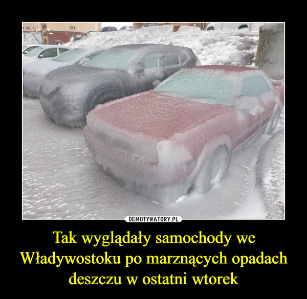https://img8.dmty.pl//uploads/202011/1605899688_1mgnmo_600.jpg