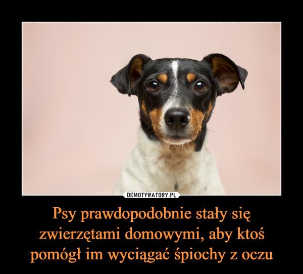 Psy prawdopodobnie stały się zwierzętami domowymi, aby ktoś pomógł im wyciągać śpiochy z oczu –