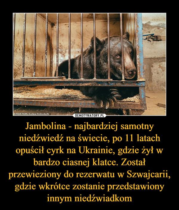 Jambolina - najbardziej samotny niedźwiedź na świecie, po 11 latach opuścił cyrk na Ukrainie, gdzie żył w bardzo ciasnej klatce. Został przewieziony do rezerwatu w Szwajcarii, gdzie wkrótce zostanie przedstawiony innym niedźwiadkom –