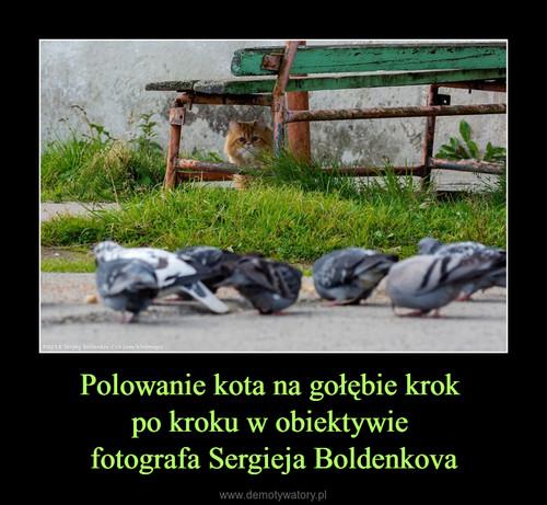 Polowanie kota na gołębie krok  po kroku w obiektywie  fotografa Sergieja Boldenkova