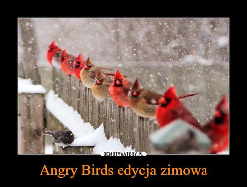 Angry Birds edycja zimowa