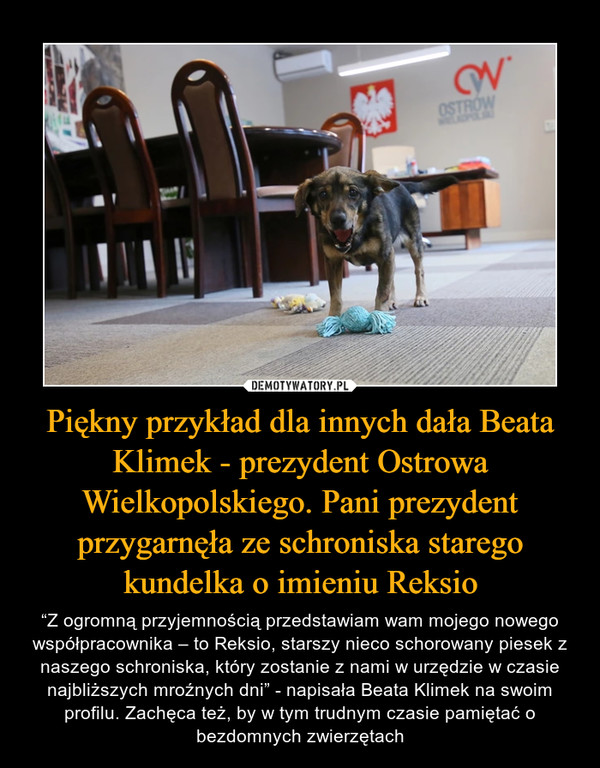 """Piękny przykład dla innych dała Beata Klimek - prezydent Ostrowa Wielkopolskiego. Pani prezydent przygarnęła ze schroniska starego kundelka o imieniu Reksio – """"Z ogromną przyjemnością przedstawiam wam mojego nowego współpracownika – to Reksio, starszy nieco schorowany piesek z naszego schroniska, który zostanie z nami w urzędzie w czasie najbliższych mroźnych dni"""" - napisała Beata Klimek na swoim profilu. Zachęca też, by w tym trudnym czasie pamiętać o bezdomnych zwierzętach"""