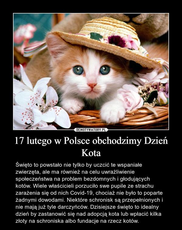 17 lutego w Polsce obchodzimy Dzień Kota – Święto to powstało nie tylko by uczcić te wspaniałe zwierzęta, ale ma również na celu uwrażliwienie społeczeństwa na problem bezdomnych i głodujących kotów. Wiele właścicieli porzuciło swe pupile ze strachu zarażenia się od nich Covid-19, chociaż nie było to poparte żadnymi dowodami. Niektóre schronisk są przepełnionych i nie mają już tyle darczyńców. Dzisiejsze święto to idealny dzień by zastanowić się nad adopcją kota lub wpłacić kilka złoty na schroniska albo fundacje na rzecz kotów.
