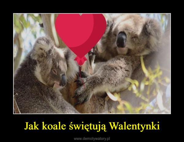 Jak koale świętują Walentynki –