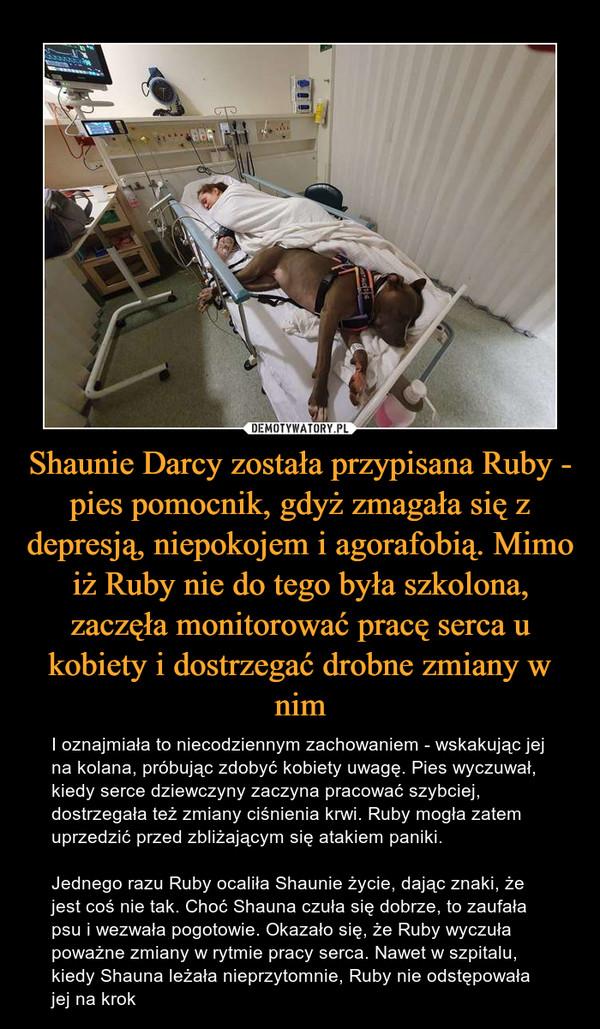 Shaunie Darcy została przypisana Ruby - pies pomocnik, gdyż zmagała się z depresją, niepokojem i agorafobią. Mimo iż Ruby nie do tego była szkolona, zaczęła monitorować pracę serca u kobiety i dostrzegać drobne zmiany w nim – I oznajmiała to niecodziennym zachowaniem - wskakując jej na kolana, próbując zdobyć kobiety uwagę. Pies wyczuwał, kiedy serce dziewczyny zaczyna pracować szybciej, dostrzegała też zmiany ciśnienia krwi. Ruby mogła zatem uprzedzić przed zbliżającym się atakiem paniki. Jednego razu Ruby ocaliła Shaunie życie, dając znaki, że jest coś nie tak. Choć Shauna czuła się dobrze, to zaufała psu i wezwała pogotowie. Okazało się, że Ruby wyczuła poważne zmiany w rytmie pracy serca. Nawet w szpitalu, kiedy Shauna leżała nieprzytomnie, Ruby nie odstępowała jej na krok