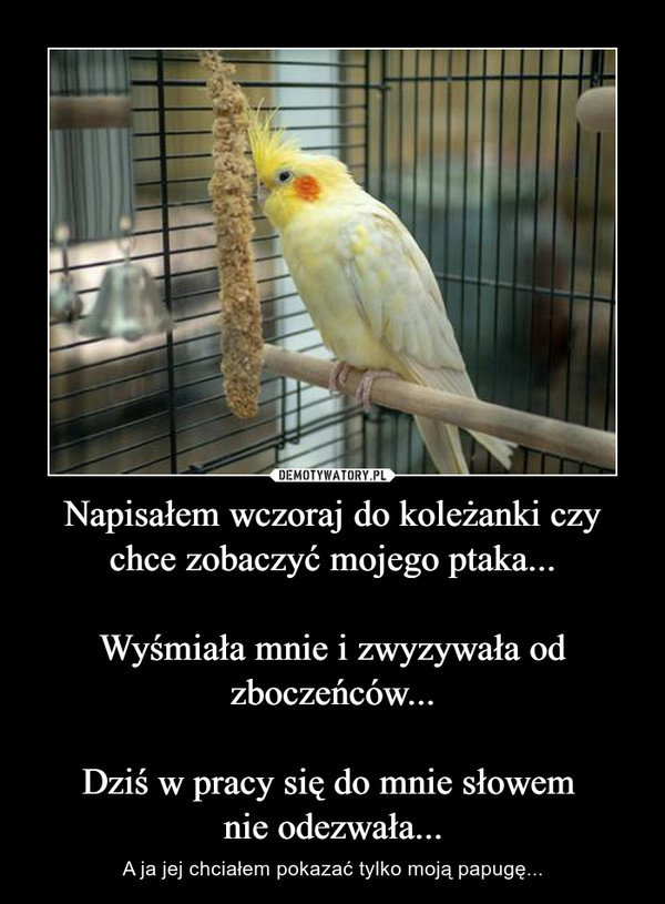 Napisałem wczoraj do koleżanki czy chce zobaczyć mojego ptaka...Wyśmiała mnie i zwyzywała od zboczeńców...Dziś w pracy się do mnie słowem nie odezwała... – A ja jej chciałem pokazać tylko moją papugę...