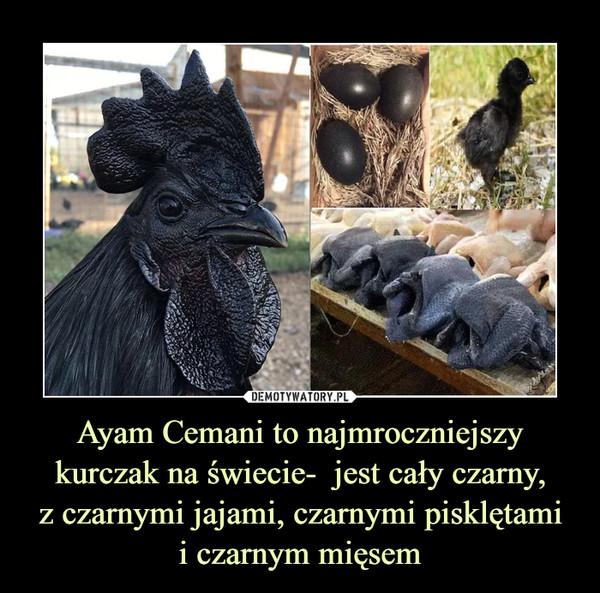 Ayam Cemani to najmroczniejszy kurczak na świecie-  jest cały czarny,z czarnymi jajami, czarnymi pisklętamii czarnym mięsem –