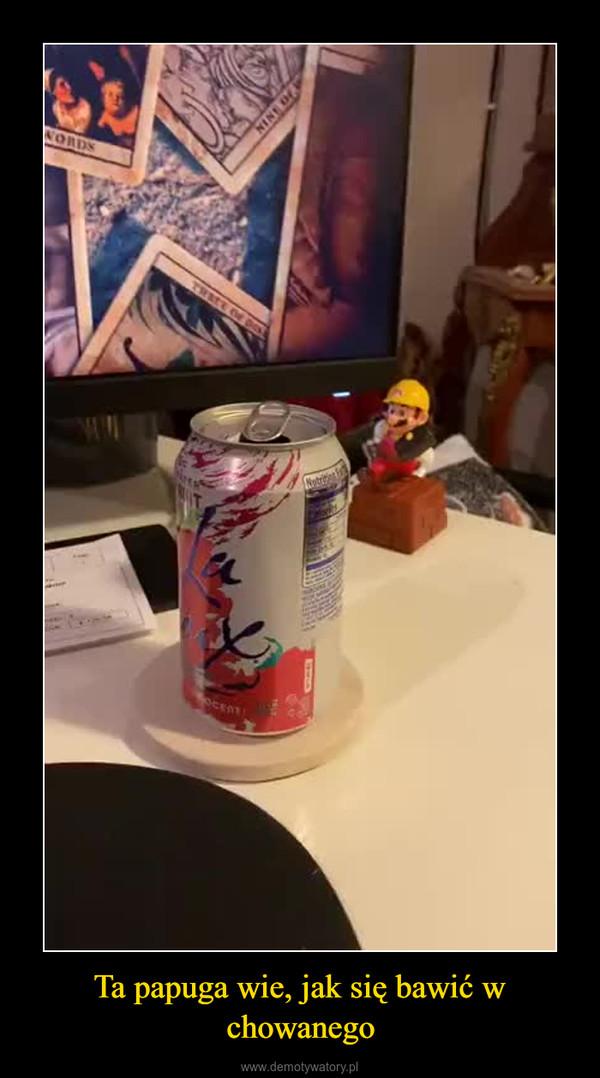 Ta papuga wie, jak się bawić w chowanego –