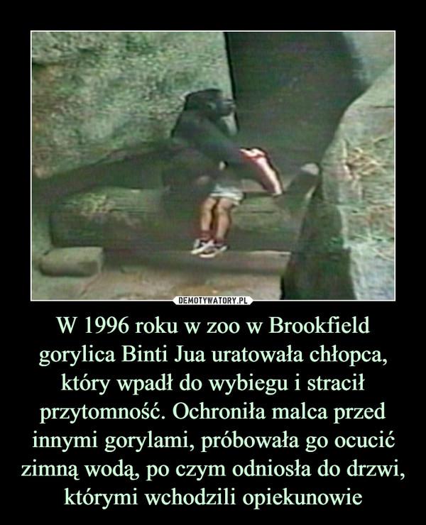 W 1996 roku w zoo w Brookfield gorylica Binti Jua uratowała chłopca, który wpadł do wybiegu i stracił przytomność. Ochroniła malca przed innymi gorylami, próbowała go ocucić zimną wodą, po czym odniosła do drzwi, którymi wchodzili opiekunowie –