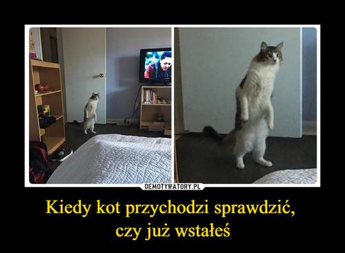 Kiedy kot przychodzi sprawdzić,  czy już wstałeś