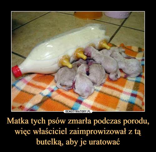 Matka tych psów zmarła podczas porodu, więc właściciel zaimprowizował z tą butelką, aby je uratować