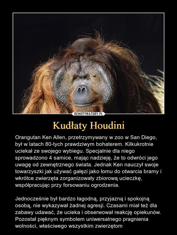 Kudłaty Houdini – Orangutan Ken Allen, przetrzymywany w zoo w San Diego, był w latach 80-tych prawdziwym bohaterem. Kilkukrotnie uciekał ze swojego wybiegu. Specjalnie dla niego sprowadzono 4 samice, mając nadzieję, że to odwróci jego uwagę od zewnętrznego świata. Jednak Ken nauczył swoje towarzyszki jak używać gałęzi jako łomu do otwarcia bramy i wkrótce zwierzęta zorganizowały zbiorową ucieczkę, współpracując przy forsowaniu ogrodzenia.Jednocześnie był bardzo łagodną, przyjazną i spokojną osobą, nie wykazywał żadnej agresji. Czasami miał też dla zabawy udawać, że ucieka i obserwował reakcję opiekunów.Pozostał pięknym symbolem uniwersalnego pragnienia wolności, właściwego wszystkim zwierzętom Orangutan Ken Allen, przetrzymywany w zoo w San Diego, był w latach 80-tych prawdziwym bohaterem. Kilkukrotnie uciekał ze swojego wybiegu. Specjalnie dla niego sprowadzono 4 samice, mając nadzieję, że to odwróci jego uwagę od zewnętrznego świata. Jednak Ken nauczył swoje towarzyszki jak używać gałęzi jako łomu do otwarcia bramy i wkrótce zwierzęta zorganizowały zbiorową ucieczkę, współrpacując przy forsowaniu ogrodzenia.Jednocześnie bardzo łagodną, przyjazną i spokojną osobą, nie wykazywał żadnej agresji. Czasami miał też dla zabawy udawać, że ucieka i obserwował reakcję opiekunów.Pozostanie pięknym symbolem uniwersalnego pragnienia wolności, właściwego wszystkim zwierzętom