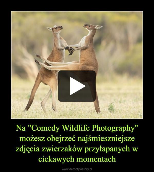 """Na """"Comedy Wildlife Photography"""" możesz obejrzeć najśmieszniejsze zdjęcia zwierzaków przyłapanych w ciekawych momentach –"""