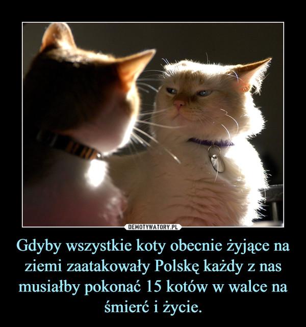 Gdyby wszystkie koty obecnie żyjące na ziemi zaatakowały Polskę każdy z nas musiałby pokonać 15 kotów w walce na śmierć i życie. –