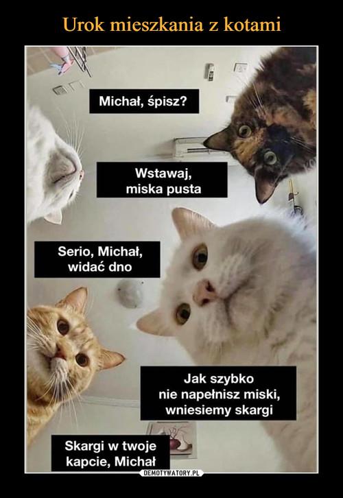 Urok mieszkania z kotami