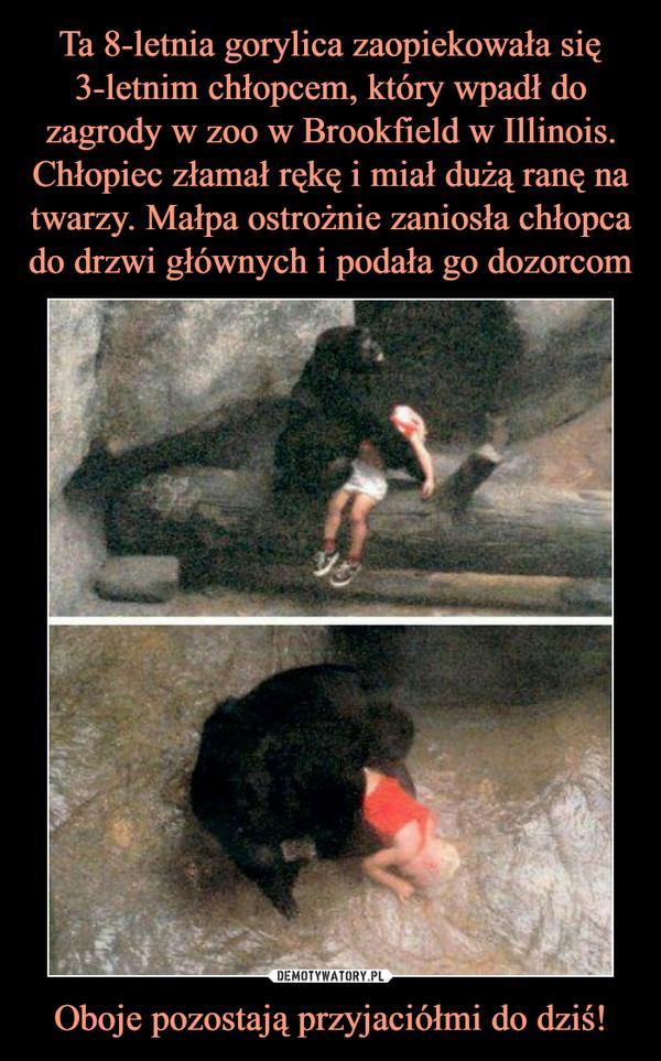 Ta 8-letnia gorylica zaopiekowała się 3-letnim chłopcem, który wpadł do zagrody w zoo w Brookfield w Illinois. Chłopiec złamał rękę i miał dużą ranę na twarzy. Małpa ostrożnie zaniosła chłopca do drzwi głównych i podała go dozorcom Oboje pozostają przyjaciółmi do dziś!